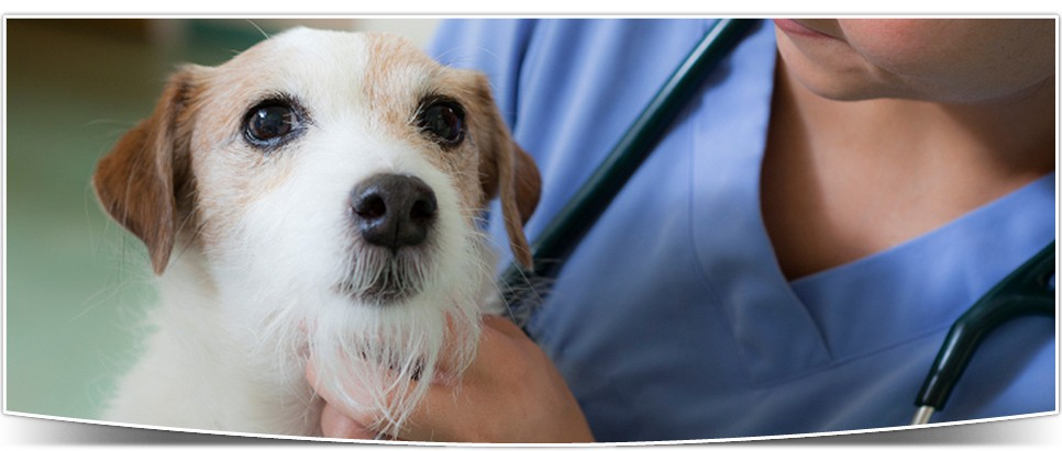 Vet Clinic In South West Fort Wayne Aboite In Animal